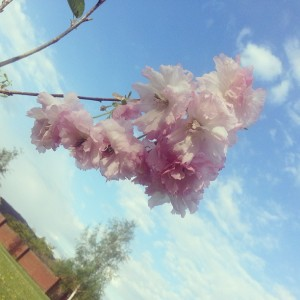 Abi's tree's first blossom