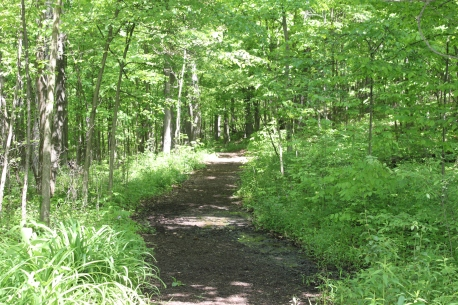 cherry_hill_nature_preserve_walking_path